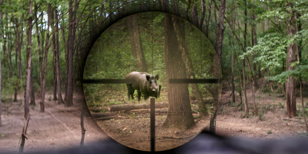 5 Best Muzzleloader Scopes With Reviews [Read Before Buying]