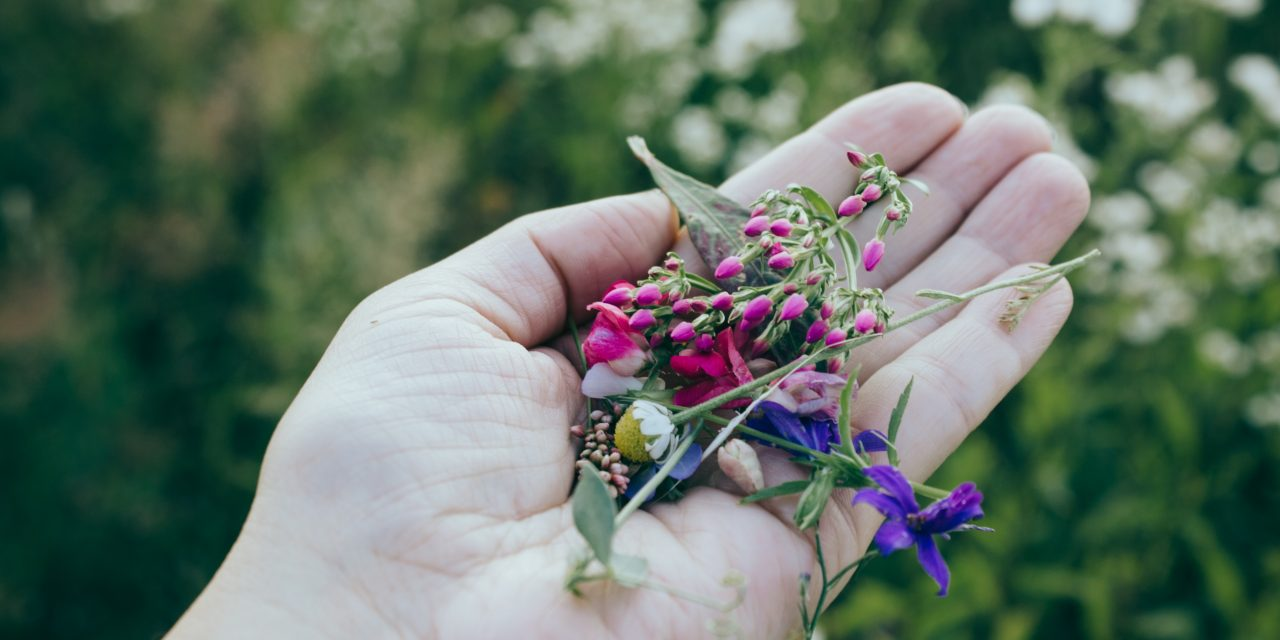 Edible Wild Plants that Can Help You Survive In Wilderness