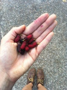urban foraging