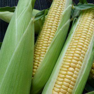 staple crops for kitchen garden