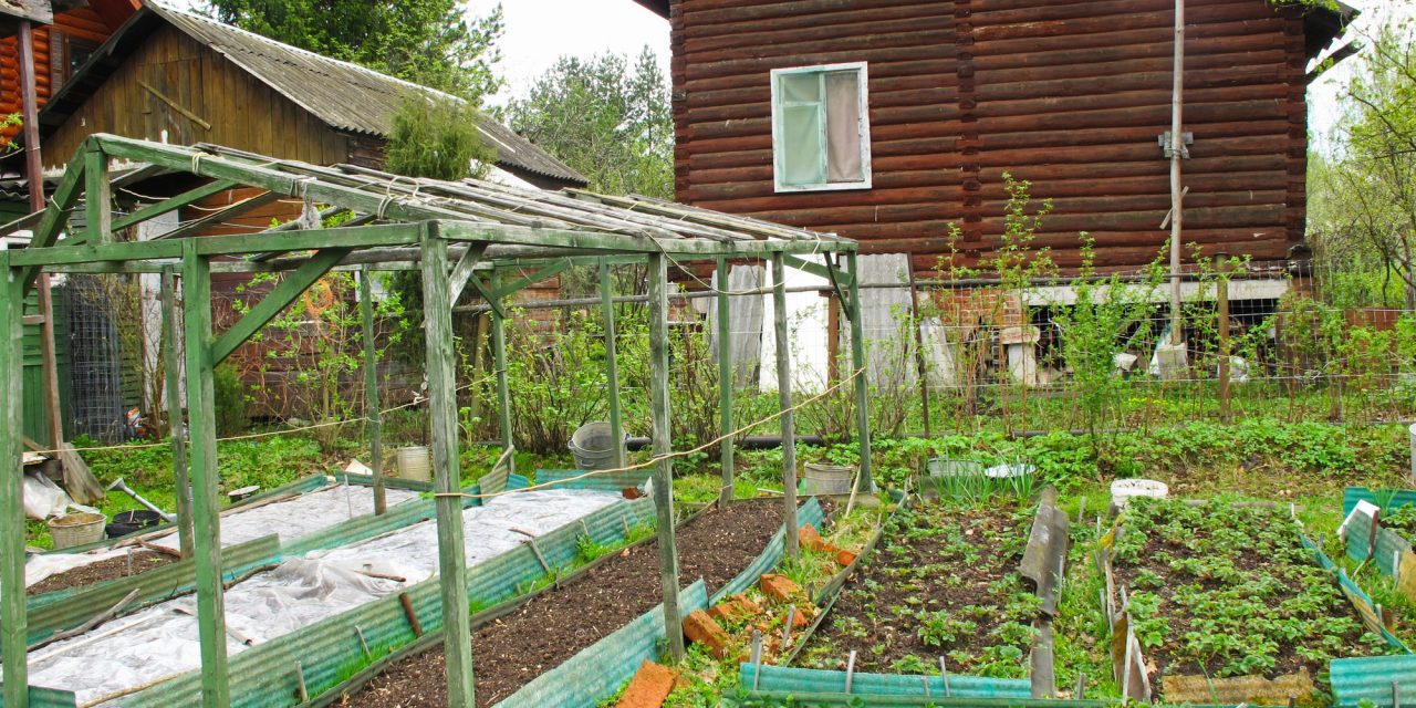 How to Start Your Own Survival Garden – Tips, Tricks and Staple Crops